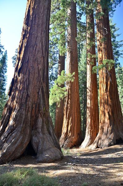 Yosemite_SM-51