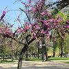 In Santiago, spring blooms in on of the many city parks