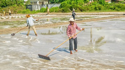 Working in a salt farm in Cambodia. Seawater is pumped into fields and the hot sun evaporates the water, leaving sea salt.