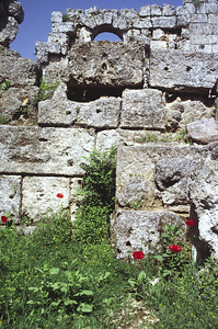 Poppies and Stone.  Stone walls in the Roman city of Perge, Southwestern Turkey