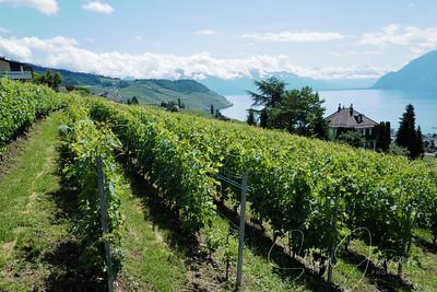 Bourg-en-Lavaux,Vaud; Schweiz; CH;