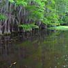 Bayou water near Caddo Lake.