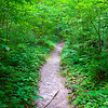 Well worn path through the dense brush. And yes, the forest was this green.