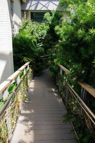 Path in the butterfly house