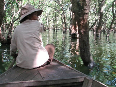 The water forest of Kompong Phhluk. Hey! This is a movie! Click the arrow to play.