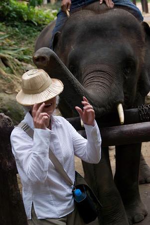 Elephant trick: put hat on head of tourist!