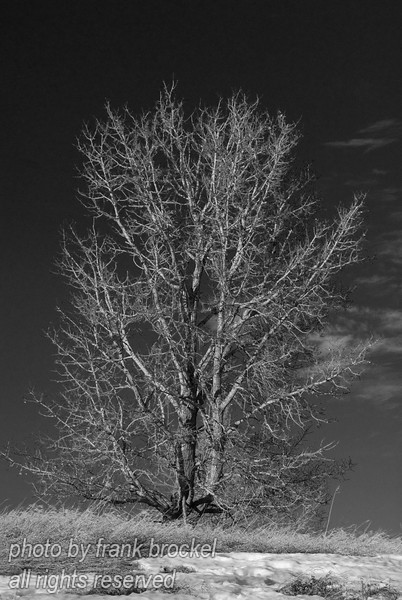 January - Portrait of a tree