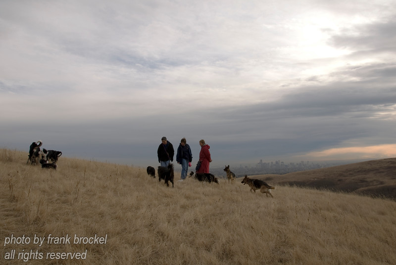 November - People and their dogs enjoying a late fall day on the hill - downtown Calgary in the background