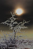 November - A surreal rendition of the sun setting behind a small tree - Enhanced Colour