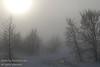 November - Something very unusual for Nosehill: fog