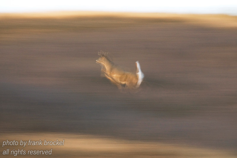 October - This deer is just a blur in full flight