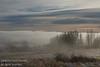 November - Fog rolling across the Nosehill landscape