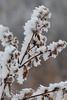 November - Ice crystals on a Burr
