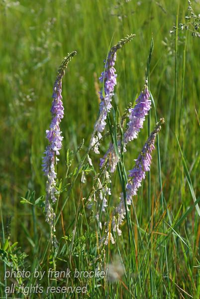 June - Wild Flowers everywhere