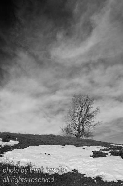 February - Portrait of a tree