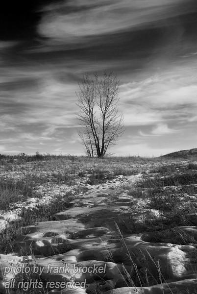 February - A wind swept park
