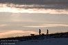 February - A couple walking their dogs under a Chinook Arch