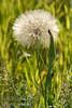 July - Wild Flowers