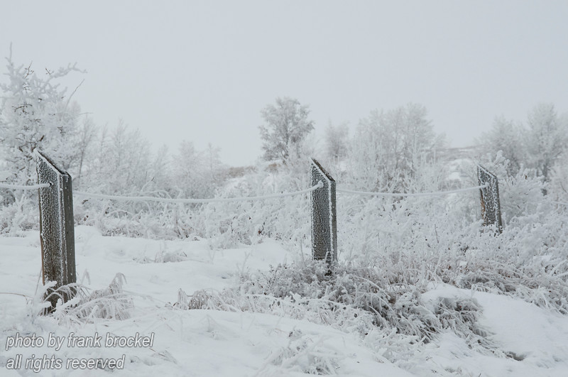 February - Hoar frost on the fence line