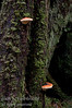 Fungus on a tree trunk in the forest.