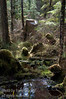 Another view of the temperate rain forest along the Pacific Northwest coast