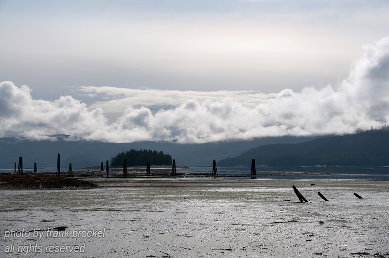 Tidal flats of Skidegate Channel separating the North island from the South island of the Queen Charlotte Islands near Quenn Charlotte City at low tide.