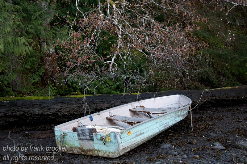 I found this small white boat, possibly abandoned, sitting on the shore.  I liked the contrast between the white boat, almost white tree branches and the dark forest background and shoreline.
