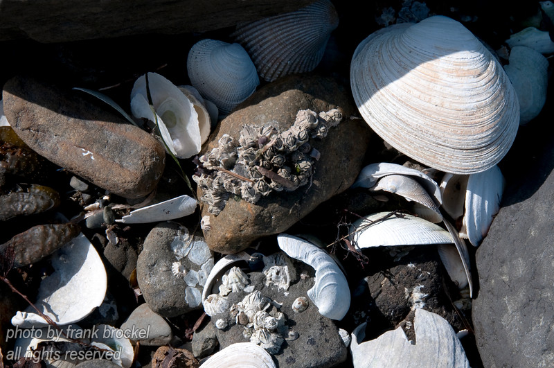 Sea shells on the shore
