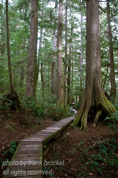 The boardwalk to Schooner Cove through the rain forest is exceptional although often very slippery.