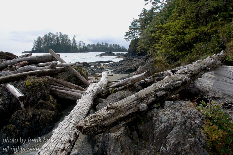 Driftwood in the rocks at Schooner Cove