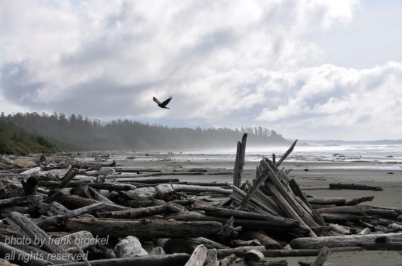 Sky, ocean, beach, driftwood and a crow at Long Beach near Tofino, Vancouver Island