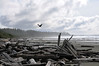 Sky, ocean, beach, driftwood and a crow at Long Beach near Tofino, Vancouver Island
