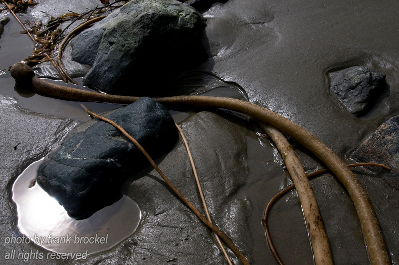 Sand, rocks and seaweed on the beach at Schooner Cove