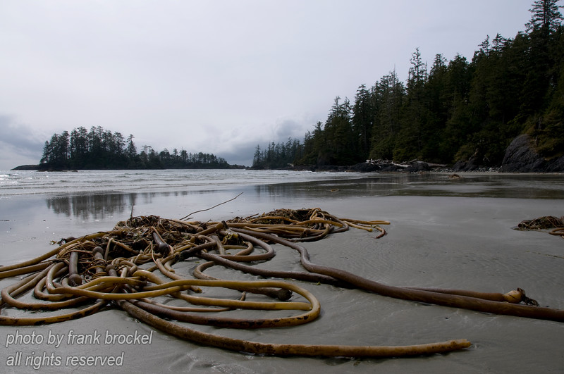 Schooner Cove and seaweed