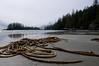 Schooner Cove and seaweed