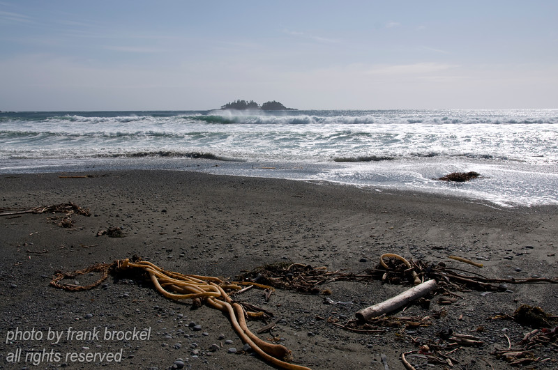 Driftwood, seaweed  and a rock outcrop in the oean at Florencia Bay