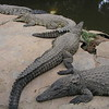 Crocodile Farm in Sun City : When you visit South Africa in 2010 and plan to stay at Sun City do not forget to discover the amazing Crocodile Farm that is at the entrance just after entrance gates. Its a safe but exciting outing for the family. A cleverly designed path will give you a birds eye view and some very close ups. When I was there they had an interesting albino crocodile. For those into gooey things. Why not buy a bag of chicken pieces and feed these lazy suntanning monsters. A small but creative Art Gallery and well stocked Arts and Craft shop with Coffee shop is an option to return to a relaxed state after all the excitement. Here some other experienced travelers comments http://www.danciprari.com/worldtrip/sun_city.htm. Enjoy a little taste of things and see these living handbags are well and alive :-).  http://www.youtube.com/watch?v=vx2-hH175lk&feature=related  here