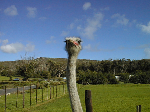 On the way to Cape Point and sourroundings Simontown, Bolders, The Cape Ostrich farm and Arts seen along the way