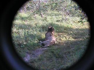 Short MOVIE clips Lions, Buffalo, roads, water falls etc