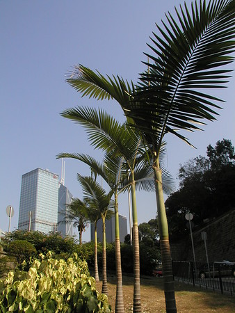 Walk through Hong Kong park and Mid Level