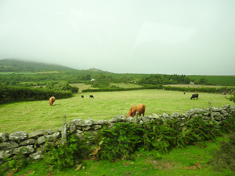 'Street scene' in the Moor in Dartmoor National Park
