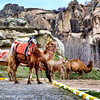 An observation from mine, the camels here in Cappadocia smells better than the camels in Cairo, Egypt.
