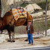 """Our tour guide shouted, """"Do not stand behind the camel!"""" No, I did not pay for the photo because I paid to use the store's restroom."""
