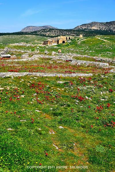 Necropolis area