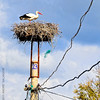 This stork's nest is built on top of city's power pole.