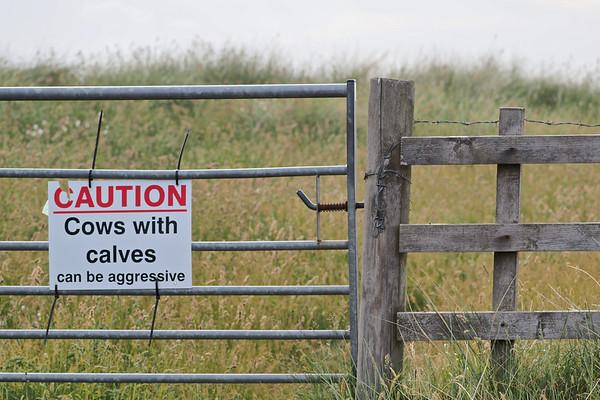 Linkhouse Farm CL site, Cows with Calves sign