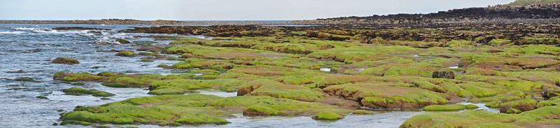 Beadnell Bay, Beadnell Bay panorama