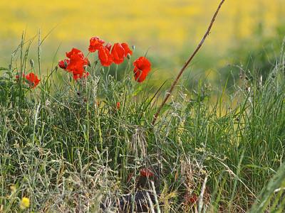 Linkhouse Farm CL site, Wild flowers