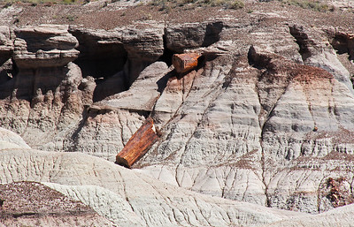 A log breaks down from its own weight as it is increasingly exposed from the dirt by erosion.