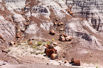 "These petrified logs were once much higher on these hills, but fell down, along with the petrified ""wood chips"" which the logs leave as they break down by exposure to the elements."